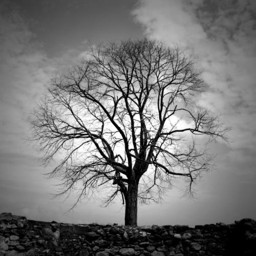 single-tree-bw-vast-photography.jpg